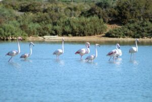 natuur-ibiza-dieren-vogels-vakantie-informatie